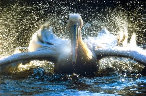 Fotografia dzikiej przyrody 2005 – Wildlife Photographer of the Year